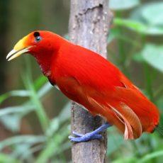 Die Schönheit der Vögel