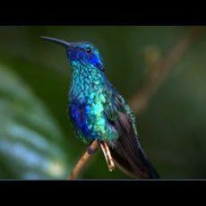 Kolibris und ihre Flugkünste