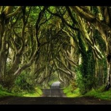 Faszinierende Baumtunnel und Bögen